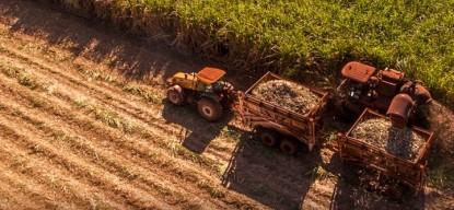 Crédito Agrícola - Plantación caña de azúcar